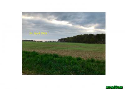 Malting barley Denmark 2019-2