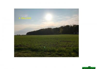 Malting barley Denmark 2019-3