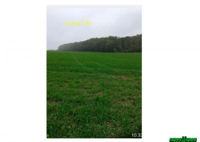 Malting barley Denmark 2019-4