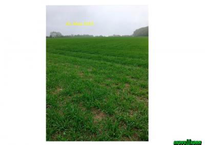 Malting barley Denmark 2019-5