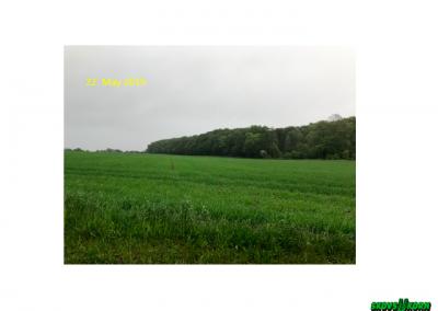Malting barley Denmark 2019-6