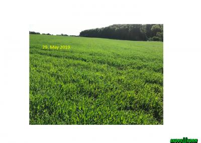 Malting barley Denmark 2019-7