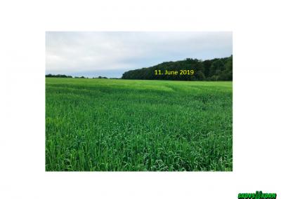 Malting barley Denmark 2019-9